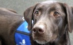 What Makes a Person's Request to Have an Assistance Animal a Reasonable Accommodation?  A Real Estate Advisory.